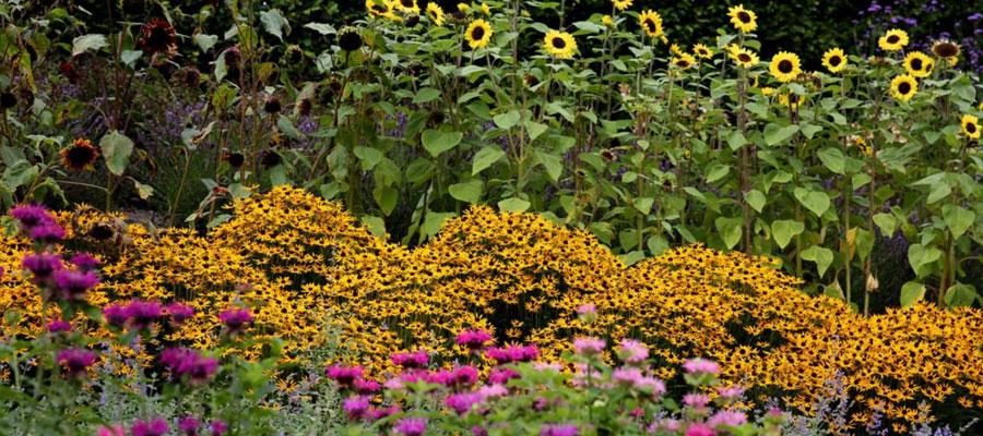 Garden plants for autumn