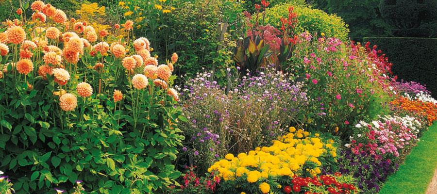 Garden plants for summer