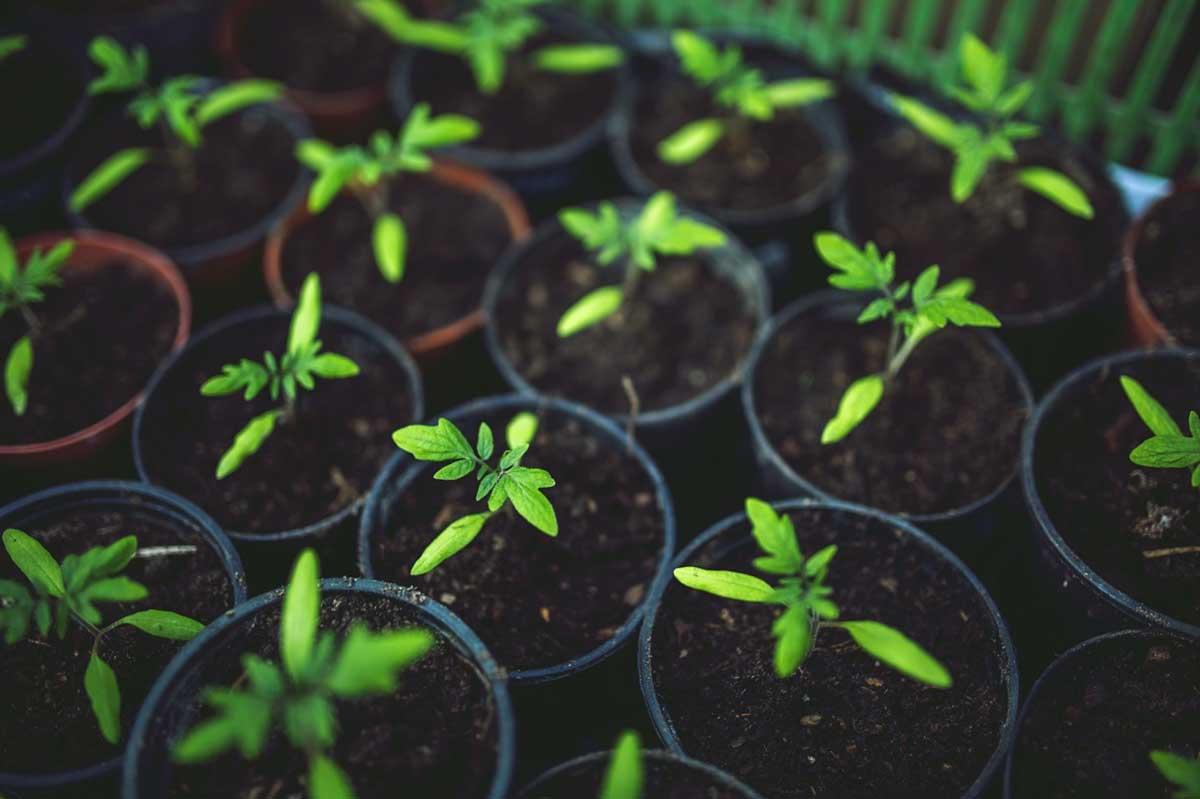 Build a Vegetable Garden