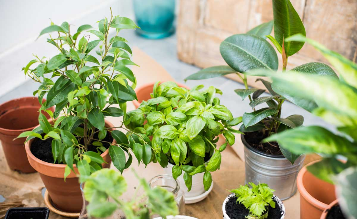 Popular Indoor Plants Should New Plant Parent Grow At Home